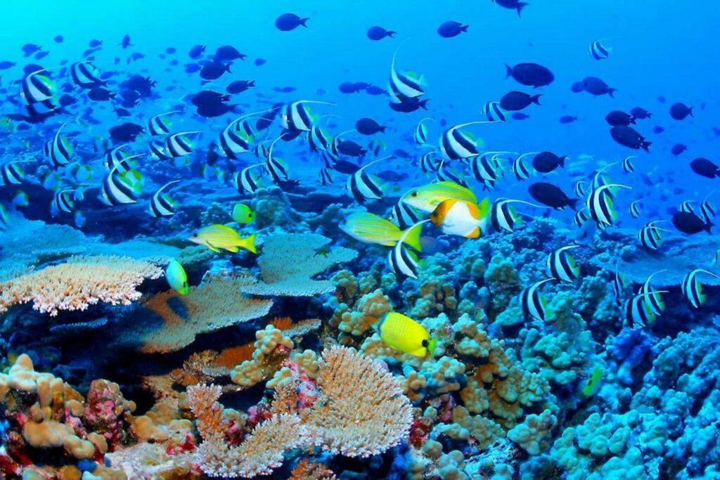 Corales cayos cochinos